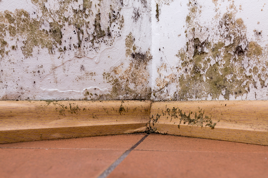 Brown Mold on Wall and Ceiling, What & How to Remove it