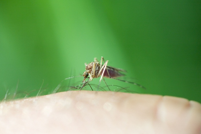 C:\Users\MOSLEM\Downloads\mosquitos-suck-royalty-free-image-157288989-1553713369.jpg