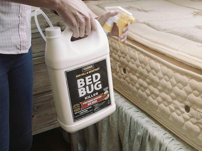 Hasil gambar untuk getting rid of bed bug