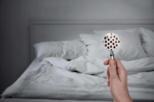Hasil gambar untuk how to know bed bug