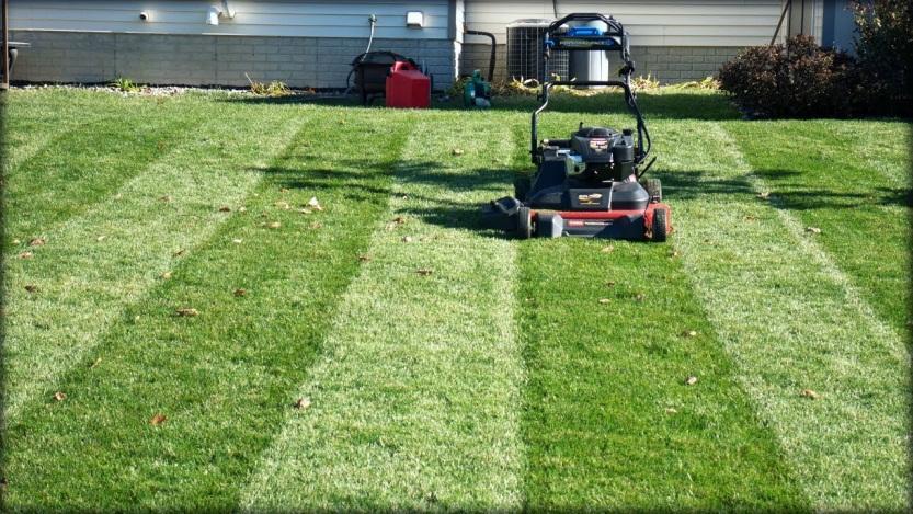 Hasil gambar untuk lawn treatment leaves